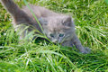 Free Hunting Kitten Stock Photos - 5272163