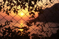 Free Sunset Behind The Grid Royalty Free Stock Photo - 5275025