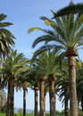 Free Lots Of Palm Trees Royalty Free Stock Photos - 5275688
