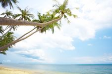 Free Tropic Scene Stock Photos - 5270013