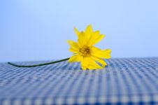 Free Daisy On Tablecloth Stock Image - 5270991