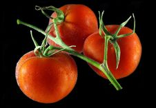 Free Tomatoes In Water 4 Royalty Free Stock Photography - 5271007