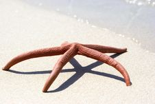 Free Sea Star At White Sand Royalty Free Stock Images - 5271009