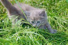 Hunting Kitten Stock Photos
