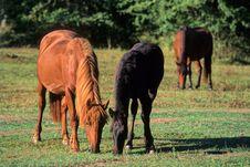 Free The Horses. Stock Photo - 5272770