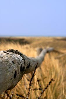 Free Dunes Castricum Stock Image - 5272771