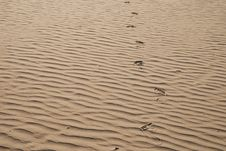 Free Foots Track On The Sand Royalty Free Stock Image - 5273306