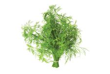 Free Bunch Of Fennel Royalty Free Stock Photos - 5274238