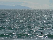 Lone Swimmer Stock Photo