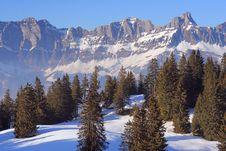 Free Alpine Forest Stock Photo - 5275340