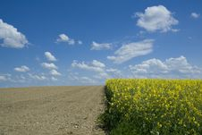 Rapeseed Field And Ploughed Field Royalty Free Stock Photos