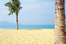 Palms And Sea Stock Photography