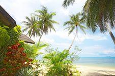 Free Tropic View Royalty Free Stock Photos - 5277118