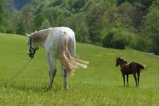 Two Horses Eating Fresh Green Grass Royalty Free Stock Photos