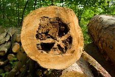 Free Damaged Wood Royalty Free Stock Images - 5277999