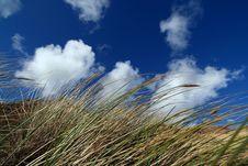 Free Dune Grass Stock Image - 5278021