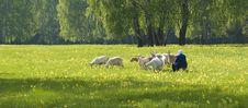 Free Spring Landscape Stock Photos - 5278193