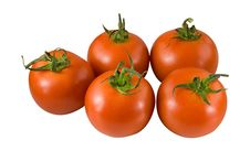 Free Tomato31 Royalty Free Stock Photos - 5278208