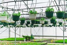 Free Greenhouse Stock Photo - 5278340