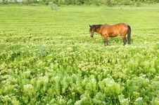 Free Rural Landscape With Horse Stock Photos - 5279083