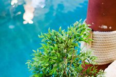 Free Potted Tree At The Swimming Pool Royalty Free Stock Images - 5279309