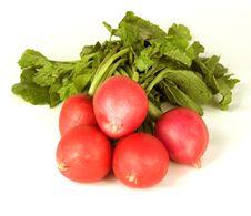 Free Garden Radish Stock Images - 5279624
