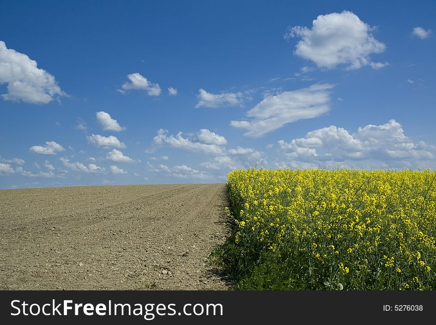 Rapeseed field and ploughed field
