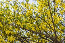 Free Yellow Spring Flowers Background Stock Photography - 52790492