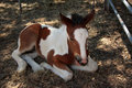 Free Horse Royalty Free Stock Photo - 5280435