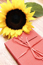 Free Sunflower And A Red Box Stock Photos - 5282403