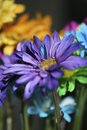 Free Brilliant Flower-Vertical Royalty Free Stock Photography - 5286617