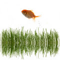 Free Grass And Fish Royalty Free Stock Photos - 5286798
