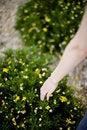 Free Woman Touching Plant Stock Photography - 5286882