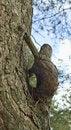 Free Unusually Tree. Stock Image - 5286971