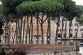 Free Trees In Rome, Italy Stock Photos - 5287623