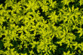 Free Yellow Flowers Stock Images - 5287774