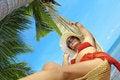 Free Sea Swing Royalty Free Stock Image - 5287776