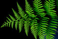 Free The Verdure Fern Leaves Stock Images - 5289014
