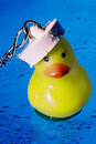 Free Sailor Ducky Royalty Free Stock Image - 5289936