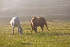Free Horses In Fog Stock Image - 5280291