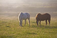 Free Horses In Fog Royalty Free Stock Photography - 5280297