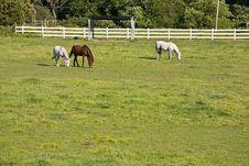 Free Horses On The Farm Royalty Free Stock Photos - 5280318