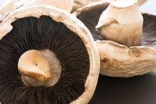 Free Mushrooms Stock Images - 5281174