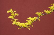 Free Yellow Leaves Against Red Wall Royalty Free Stock Photography - 5282317