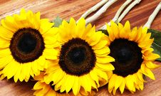 Free Sunflowers Royalty Free Stock Photography - 5282367