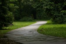 Free Serpentine Road In The Forest Royalty Free Stock Photography - 5284407