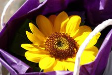 Free A Purple Bag With A Sunflower Royalty Free Stock Images - 5285909