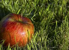 Red Apple And Green Grass Royalty Free Stock Photography
