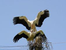 Free Stork Royalty Free Stock Photo - 5286735