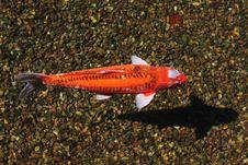 Free Fish Stock Photos - 5286743